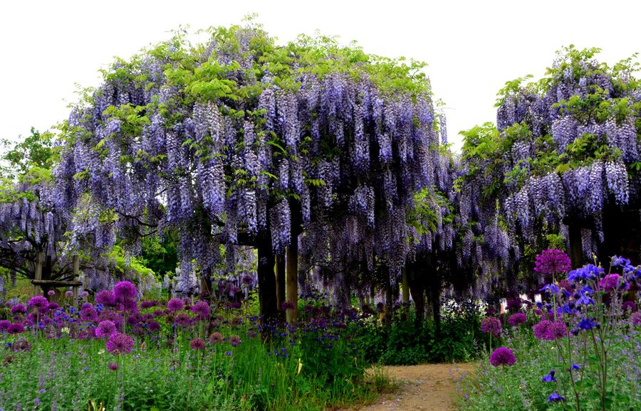 größter rhododendronpark deutschland